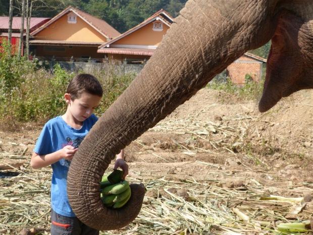 enfant avec elephant laos