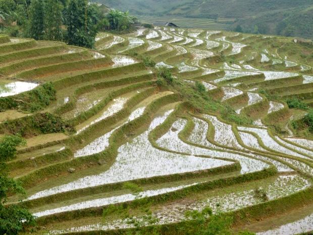 Rizières, Sapa, Vietnam