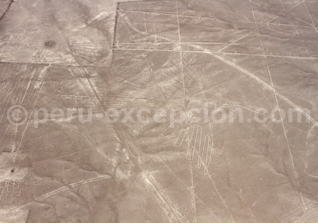 geoglyphes lignes nazca vues du ciel condor