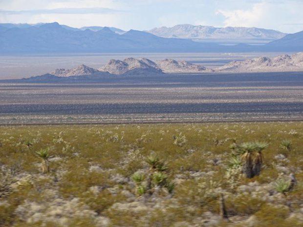 Désert de Mojave en famille