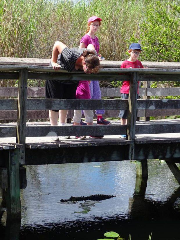 Everglades - Anhinga Trail avec des enfants