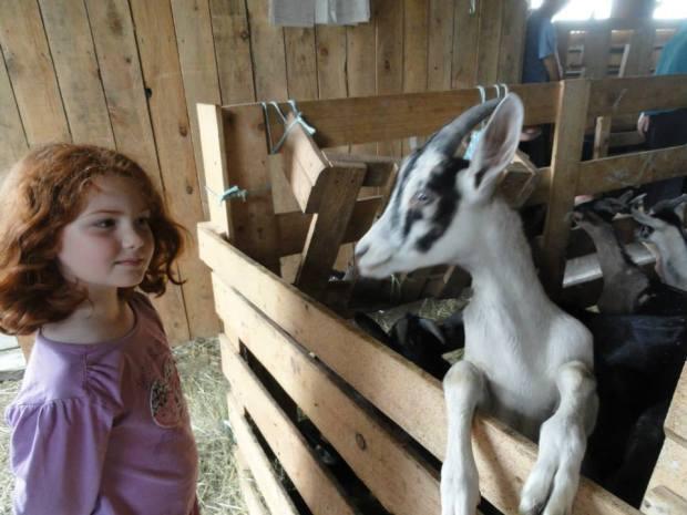 Ferme les Broussailles - Martinville avec des enfants
