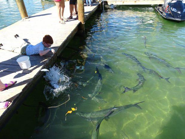 Floride - Keys avec des enfants - nourrir les poissons