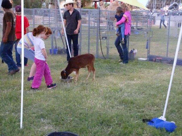 Rodéo à Lancaster (Californie) avec des enfants