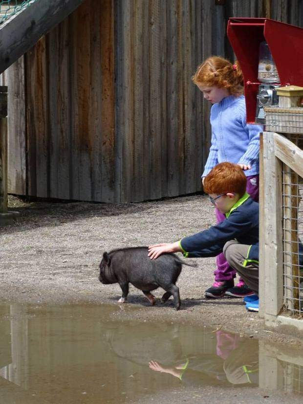 Zoo de St Félicien